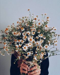 daisies bouquet, bouquet of daisy flowers, My Flower, Wild Flowers, Beautiful Flowers, Daisy Flowers, Unique Flowers, Flower Art, Beautiful Pictures, Flower Aesthetic, Aesthetic Plants
