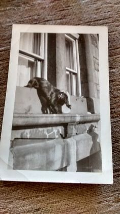THE GREAT ESCAPE FUNNY DOG Dog Search, The Great Escape, Funny Dogs, Ebay