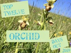 Sean Cole continues his series of top twelve orchid days out! In the third episode he visits Hampshire in May. Gilbert White, Father Ted, Green Wing, County Clare, Dry Stone, Purple Orchids, Tall Plants, Sea Birds, East Sussex