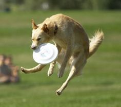 10.	Playing Frisbee.  You are great at Frisbee! And I really love the summers in the backyard tossing it around with you and the rest of the family!