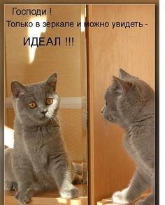 Домашний любимец. Кошки. Породы кошек ...
