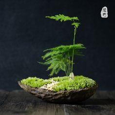 日式文竹盆栽苔藓微景观微型盆景生态桌面盆栽生日礼物茶艺桌摆件