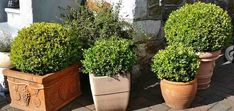 40 Small or Dwarf Evergreen Shrubs (With Pictures and Names) Plants For Planters, Front Yard Planters, Garden Planters, Evergreen Flowering Shrubs, Evergreen Bush, Ornamental Grasses, Holly Shrub, Compost, Gardens