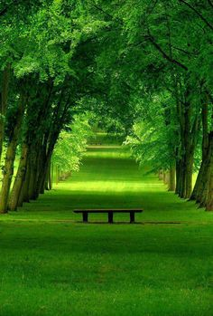 Green Park Chamrande France | Most Beautiful Pages: Beautiful trees blending perfectly with the grass. Meditate