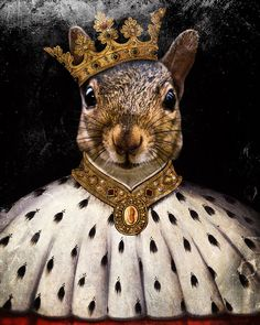 Squirrel Art Print Animal Photography King by TheLonelyPixel