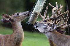 bird feeder in backyard - Google Search