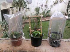 Diário de uma Sementeira: Como plantar sementes - estufas para germinação