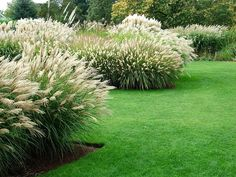 Grass garden photos