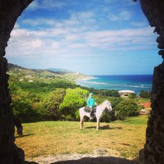 Ride Where You Love, White Horse, Caribbean  riding #HorseColicSymptomsFree http://www.loveyour.horse