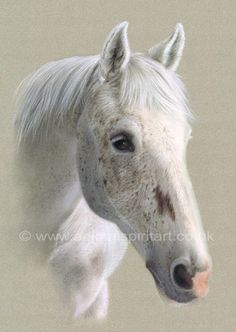 Commissioned pastel portrait of beautiful horse Star