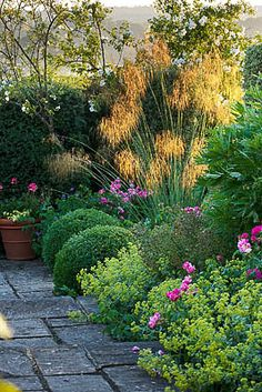 Box, stipa, alchemilla, pink something