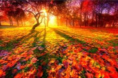 The top rated photos on right now, as voted on by the community of photographers and enthusiasts. Many of the best images on are available for royalty-free licensing. Nature Pictures, Beautiful Pictures, Pretty Photos, Sunset Wallpaper, Autumn Trees, Autumn Forest, Forest Sunset, Autumn Leaves, Amazing Nature