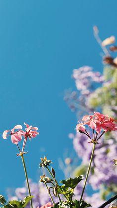 Wallpaper Nature Flowers, Flower Background Wallpaper, Beautiful Flowers Wallpapers, Beautiful Photos Of Nature, Flower Phone Wallpaper, Beautiful Nature Wallpaper, Scenery Wallpaper, Flower Backgrounds, Wallpaper Backgrounds