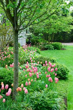 """Nine years ago, Elizabeth Moyer from Pretty Pink Tulips decided to plant pink tulip bulbs along the front and side of her house. This became a tradition, her outdoor """"signature,"""" and the inspiration for the name of her fabulous blog. She now plants over 1,000 tulip bulbs each year year. A fellow native Texan, Elizabeth lives in …"""