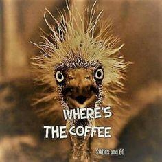 Funny good morning pictures humor coffee 28 ideas for 2019 Coffee Talk, Coffee Is Life, I Love Coffee, Coffee Coffee, Starbucks Coffee, Coffee Plant, Coffee Girl, Coffee Break, Starbucks Green
