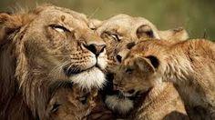 Bildergebnis für serengeti wallpaper