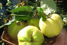 Honeydew, Fruit, Food, Honeydew Melon, Essen, Yemek, Meals