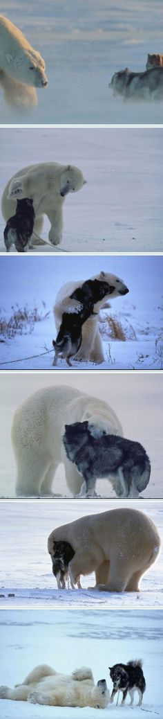 love and friendship can transcend species :)