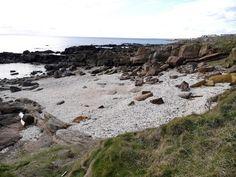A beach of sea shells near Pittenweem - Fife Coastal Path