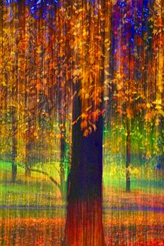 images of an abstract fall color scene - Google Search