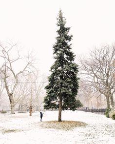 """Gefällt 1.3 Mio. Mal, 8,975 Kommentare - Instagram (@instagram) auf Instagram: """"Photo by @augustabelle A boy and his tree 🎄 #TheWeekOnInstagram"""""""