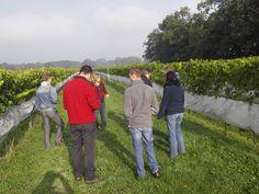 Wijncursisten in de wijngaard