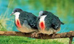 Fotos de Natureza: Pássaros raros