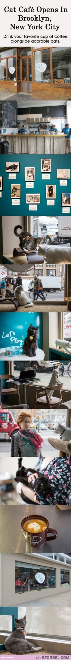 Brooklyn's First Adorable Cat Cafe… That is AWESOME!!! I will go there. I will work there. I will die happy there.