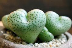 Amazing Unusual Plants To Grow In Your Garden