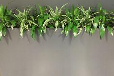 Troughs - Eco Green Office Plants Inside Garden, Roof Terraces, Green Office, Eco Green, Office Plants, Balcony Garden, Garden Ideas, Planters, Terraces