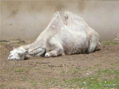 Funzug.com | Cute Animals Sleeping