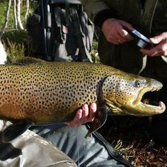 Fishing in Oslo - https://www.inatur.no/fiske/50fee701e4b0bfb3e46a9d45/fiske-i-oslomarka-ofa  | Inatur.no
