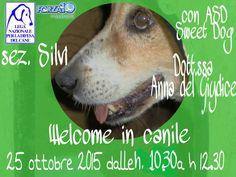 #welcomeincanile - 25/10 Open Day c/o #canile di #Silvi (TE) con i #volontari di #LegadelCane