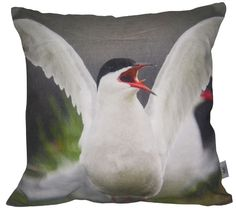 Pute / Artic Tern