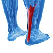 How Can I Fix My Tight Achilles? - Runner's World Australia and New Zealand
