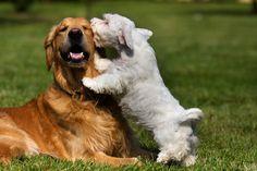 """""""¡No me lamas!"""". ¿Cuántas veces le has dado esa orden a tu perro? Y es que por más que intentamos que no lo hagan, ellos siguen y siguen. ¿Has pensado que quizá tienen una razón para hacerlo? Pues la tienen, no solo una, sino varias. Estamos seguros de que te gustará conocerlas y de que más de una quizá te sorprenda."""