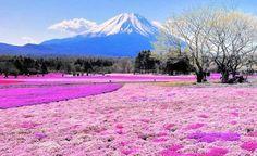 Japonya'da ki Shibazakura Tepesi