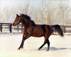 Mr. Prospector in the snow at Claiborne. Tony Leonard photo. Racehorse d15a0340fe88