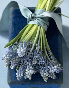 Bouquet of Muscari (grape hyacinth) with beautiful silky ribbon