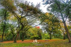 Colorful Autumn at Central Park Newyork USA . . . . #beingatraveler #bilalazam #blogger #travelblogger #newyork #centralpark #park #green #leaves #usa #backpacker #explorer #adventurist #traveler #travel #world #love #nature #beauty #photooftheday #travelgram #picoftheday #follow #like #amazing #instafollow #instalike #photo #cool #colorful