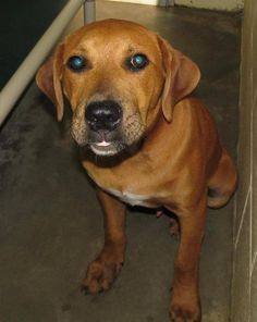 PLEASE adopt me! # 12323~ This is my last chance and I could be put to sleep any day now! I'm ONLY 8 MONTHS OLD, male Hound Mix. Please rescue me! Location:1450 N. Horner Blvd Sanford, NC 27330 Phone Number:919.776.7446