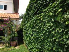 Myown Garden/ Casa das Corujas Brazil <3