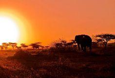 Elephant in Afrika South Africa, Elephant, Park, World, Travel, Animals, The World, Animais, Animales