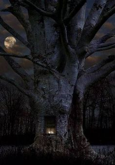 tree by moonlight. Tree natuurbeleving www. Beautiful Moon, Beautiful World, Beautiful Places, Beautiful Pictures, Beautiful Tree Houses, All Nature, Amazing Nature, Tree Forest, Dark Forest