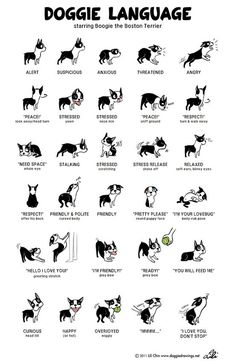 7.) Know what your dog is saying with their body language. Police should study this.