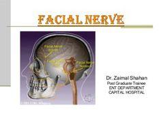 7 Ideas De Peatc Auditivo Neurología Otorrino