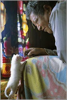Tibétain et son chaton blanc