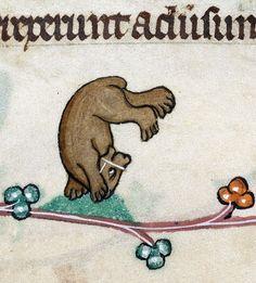 discarding images - bear acrobat Pabenham-Clifford Hours, England ca....