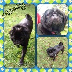 Dog kennels Victoria. Monty