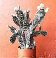 """2,118 Likes, 20 Comments - Cactus & Suculentas (@cactus_y_mas) on Instagram: """"Y para hoy este espléndido cactus que espero les guste; like y compartan. . . . . . . . . . . . . .…"""""""